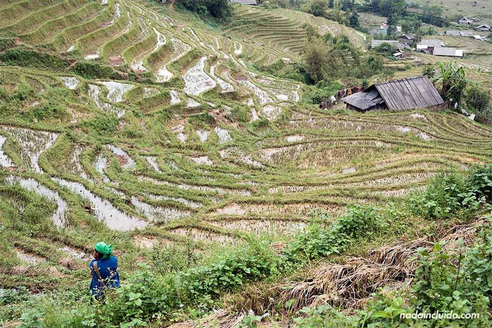 Arrozales inundados en la región de Sapa, provincia de Lao Cai (Vietnam)