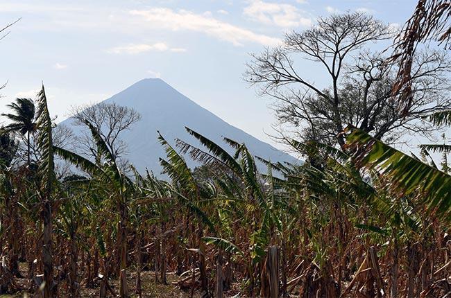 Vista del Volcán Concepción desde un campo de plataneros, Isla de Ometepe (Nicaragua)
