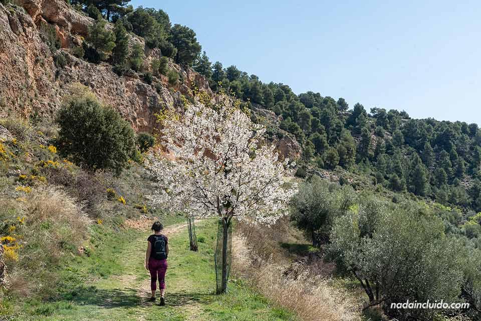 Recorriendo el sendero hacia las Peñas de Masmut (Matarraña, Aragón)