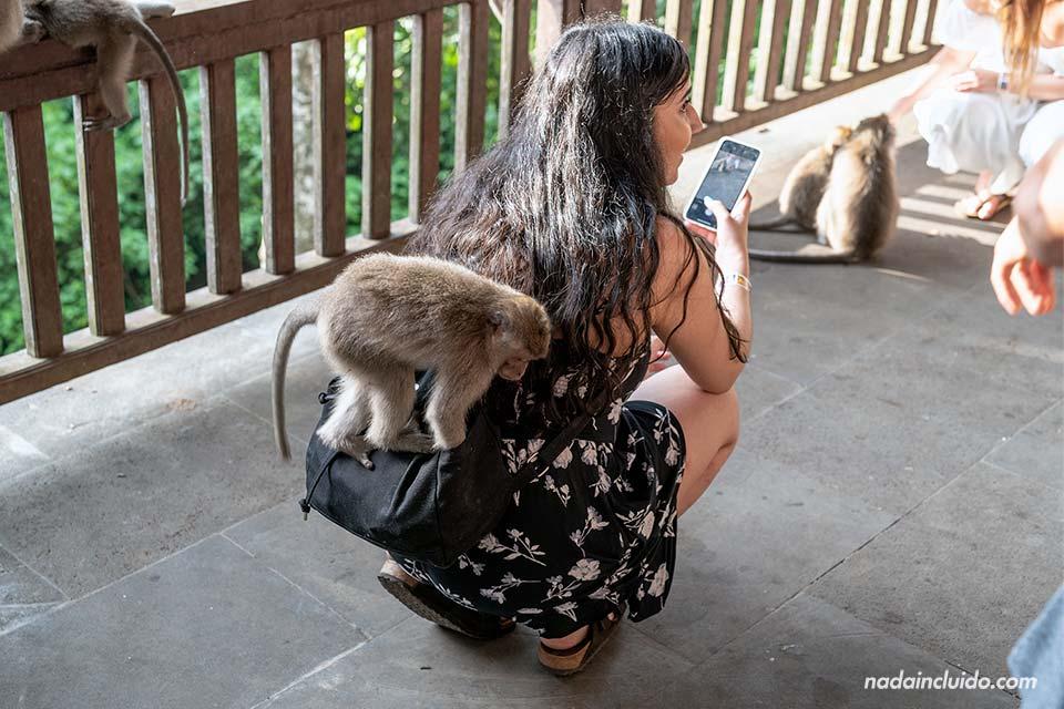 Mono robando en el Monkey Forest de Ubud (Bali, Indonesia)