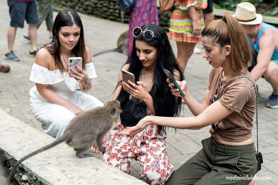 Turistas en el Monkey Forest de Ubud (Bali, Indonesia)