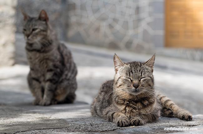 Gatos en Boltaña (Sobrarbe, Aragón)
