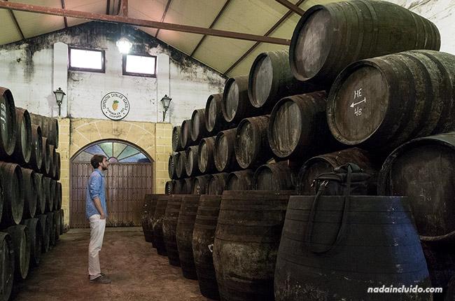 En la bodega del museo del moscatel de Chipiona (Cádiz)
