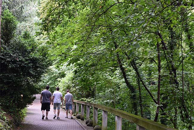 Paseando por el Jardín Botánico de Cluj-Napoca (Rumanía)