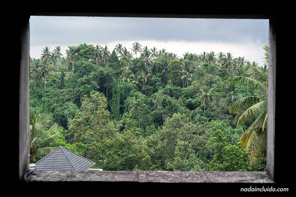 Ventana en el Campuhan Ridge Walk de Ubud (Bali, Indonesia)
