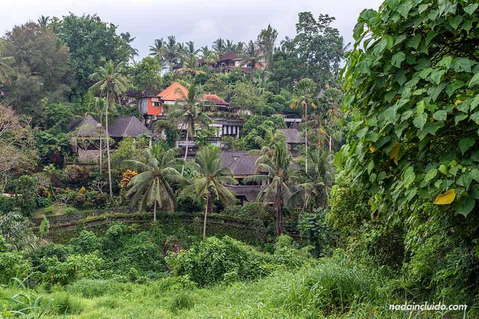 Vistas de Ubud desde el Campuhan Ridge Walk (Bali, Indonesia)