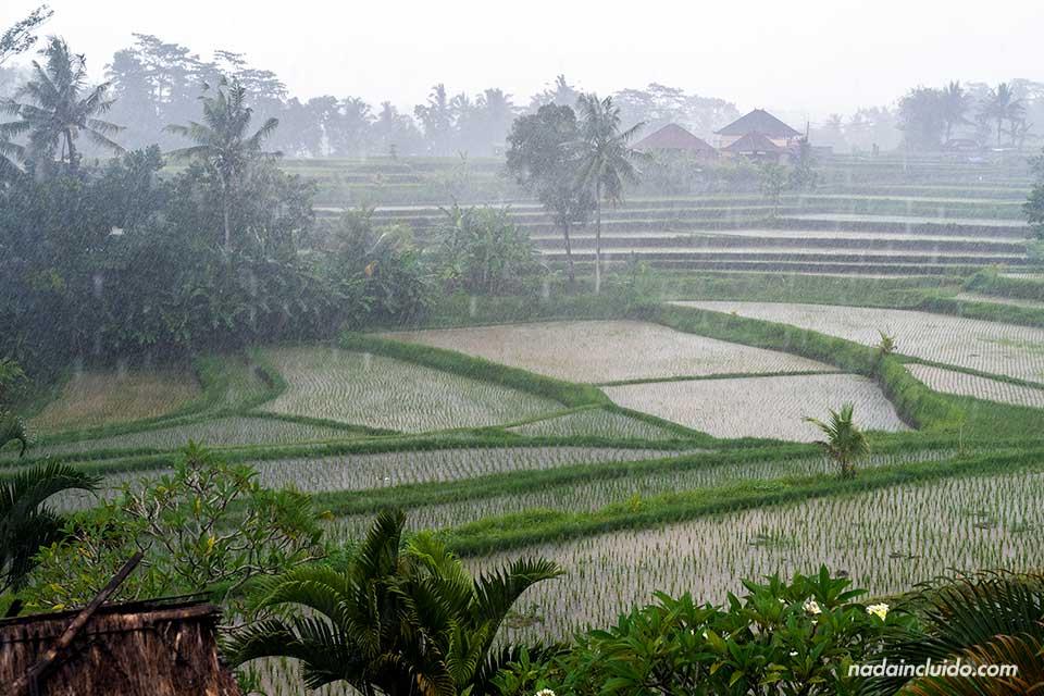 Lluvia en el Campuhan Ridge Walk de Ubud (Bali, Indonesia)