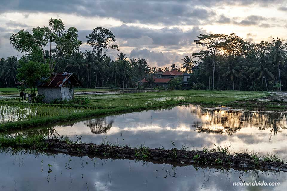 Atardecer en el Magic Rice Field de Ubud (Bali, Indonesia)