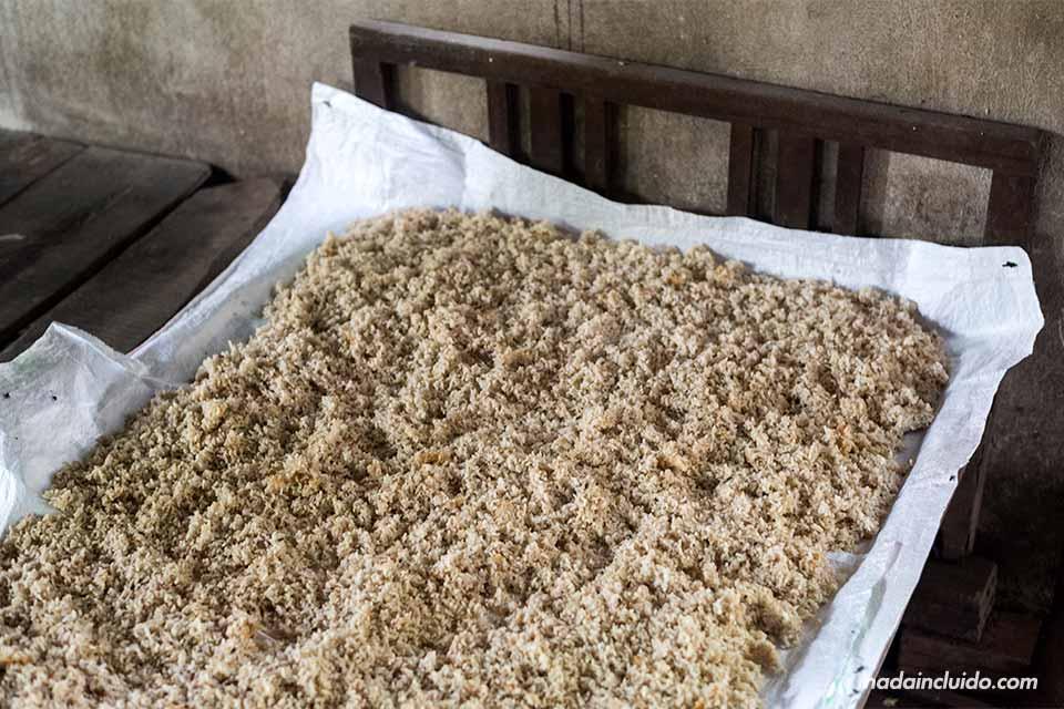 Arroz fermentando en una destilería de los alrededores de Hoi An (Vietnam)
