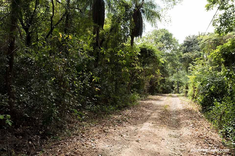 Sendero en la Reserva Natural Absoluta de Cabo Blanco (Costa Rica)