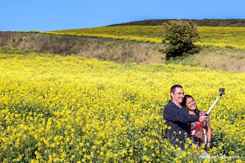 Una pareja se fotografía en un campo de flores amarillas en el camino al Volcán Irazú (Costa Rica)