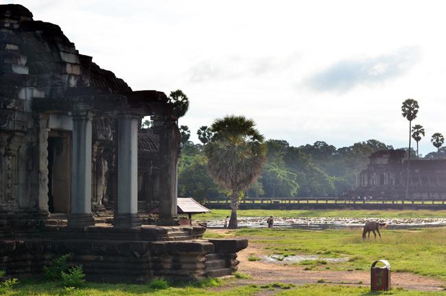 Un caballo pasta en los alrededores del Angkor Wat (Siem Reap, Camboya)
