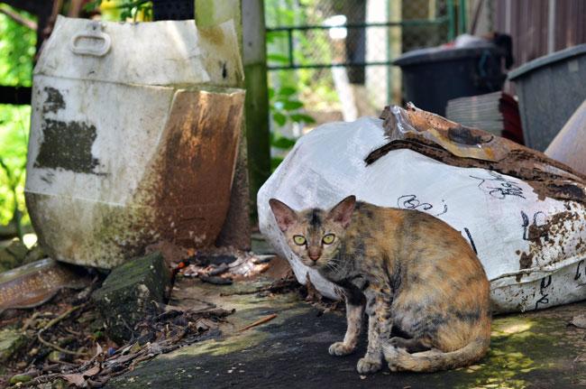 Gato entre basuras en Aranyaprathet (Tailandia)