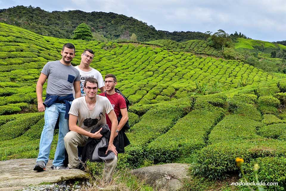 En una plantación de Té en las Cameron Highlands (Malasia)