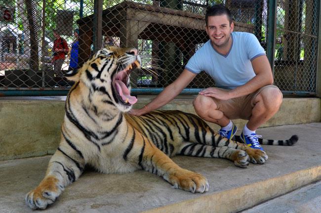 Con el tigre grande en el Tiger Kingdom de Chiang Mai (Tailandia)
