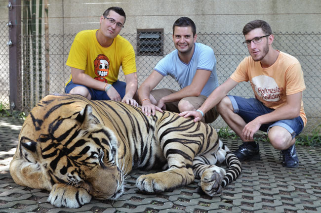 Con un tigre grande en el Tiger Kingdom de Chian Mai (Tailandia)