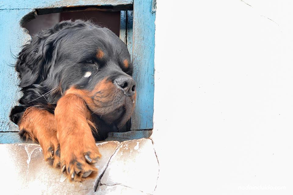 Cuzco,-San-Blas,-balcón-perro-(I)