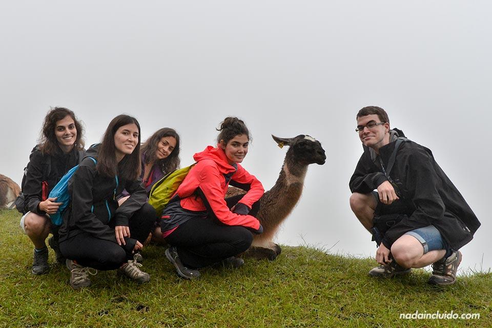 Machu-Picchu,-llamas-(L,M,M,L,O)