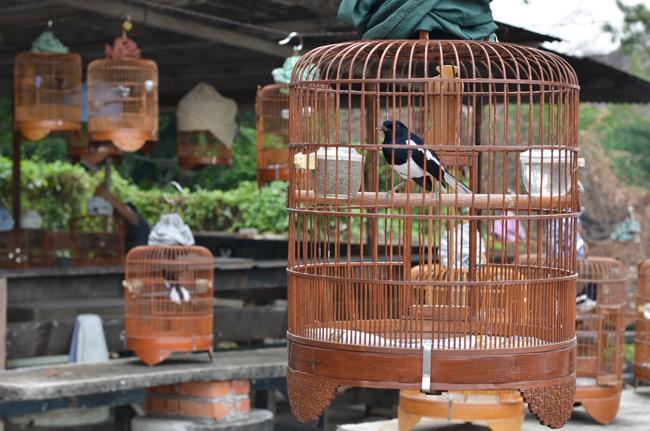 Reunión de pájaros en la periferia de Malaca (Malasia)