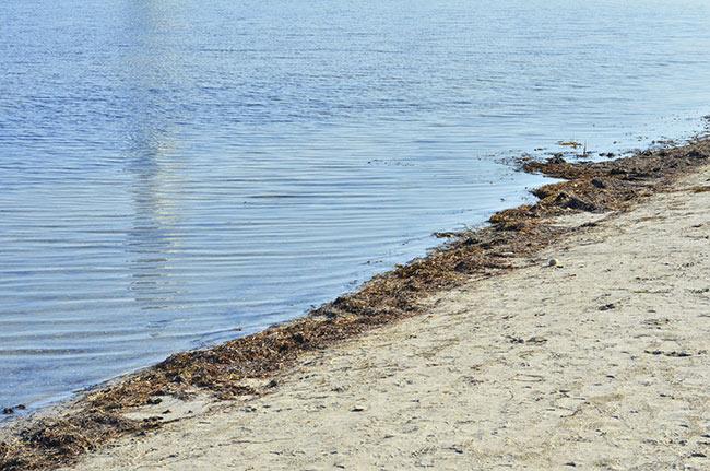 Reflejo del Turning Torso en la playa de Malmö (Suecia)