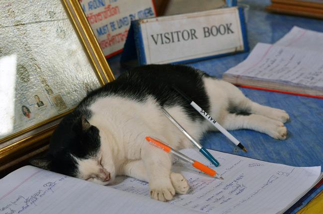 Un gato descansa sobre el libro de visitas del Big Buddha de Phuket (Tailandia)