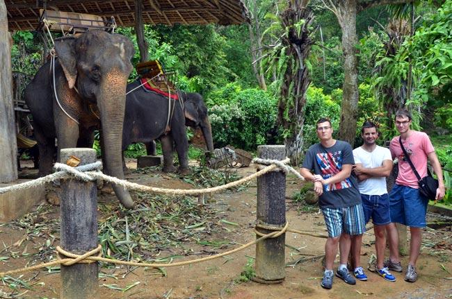 En una granja de elefantes en Phuket (Tailandia)