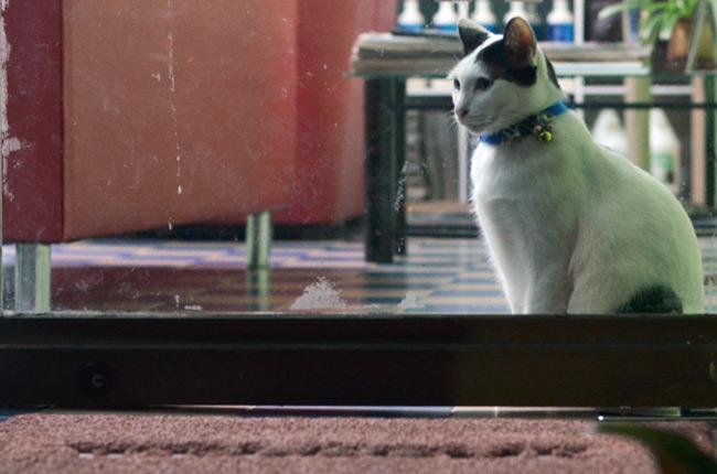 Gato en una casa de Phuket Town (Tailandia)