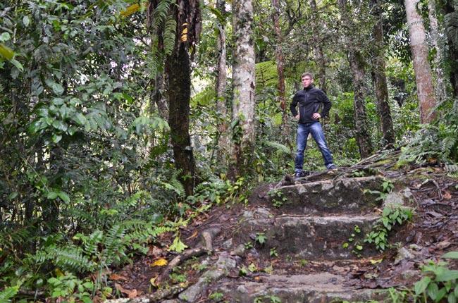 Tanah-Rata-bosque-(D)